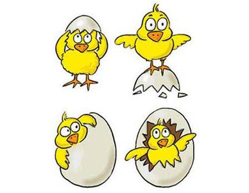 Chicks - Chocolate Packaging